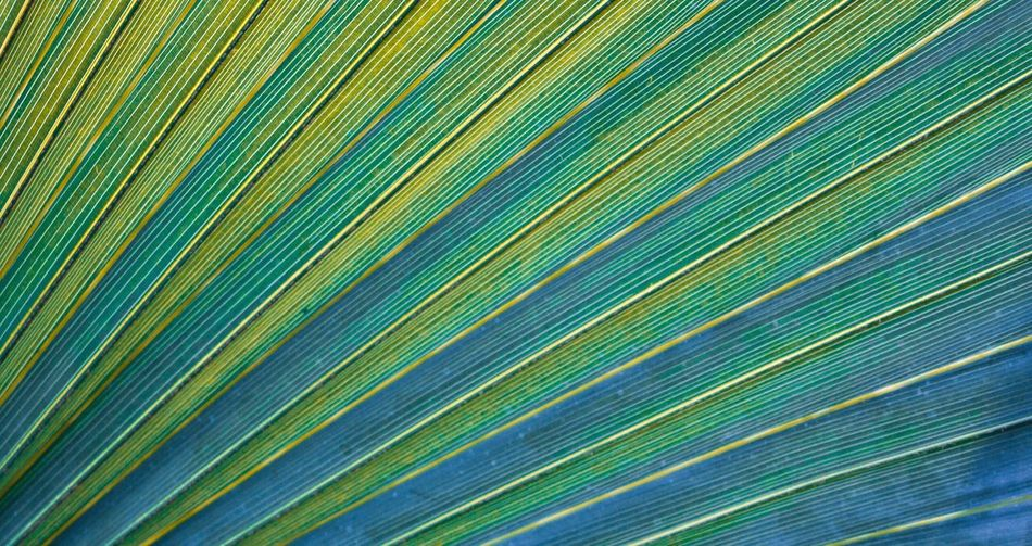 Full Frame Backgrounds Close-up Green Color Pattern Blue Repetition Multi Colored Growth Leaves Green Nature Palm Leaf Fragility Tranquility Beauty In Nature Vibrant Color Large Group Of Objects