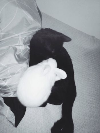 Neeko and the bunny snuggling. Cute Pets Cat Bunny  Furbaby Taking Photos Love EyeEm Nature Lover January 2015 Snuggling