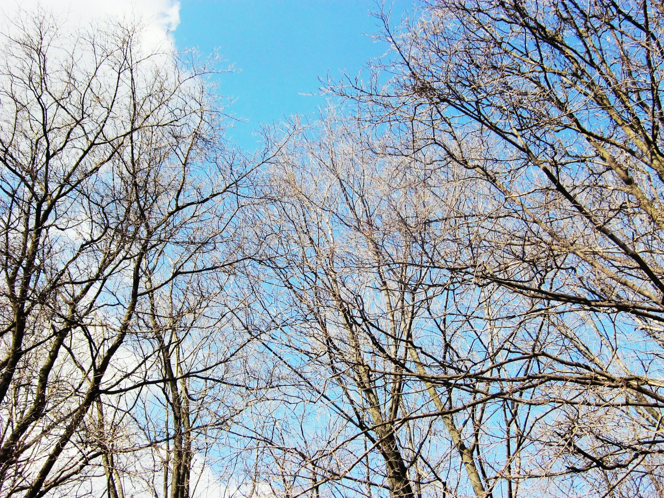 low angle view, tree, sky, nature, no people, bare tree, outdoors, day, clear sky, branch, bird, beauty in nature, animal themes