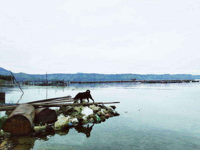 Dog underground Dog Lake Lake Toba Lake View Water Sea Fishing Net Buoy Sky Fishing Equipment Calm Horizon Over Water Ocean