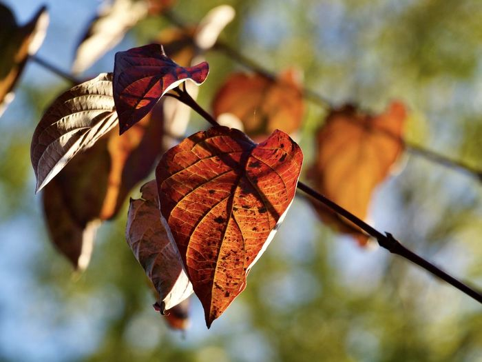 Awesome leaves