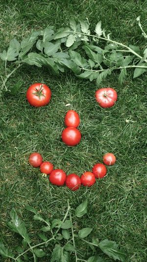 High angle view of tomatoes on field