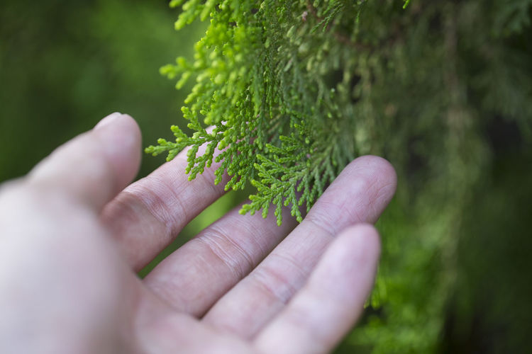 Human Hand Hand Human Body Part Green Color One Person Plant Real People Unrecognizable Person Body Part Holding Finger Human Finger Nature Selective Focus Day Lifestyles Close-up Personal Perspective Focus On Foreground Outdoors Human Limb