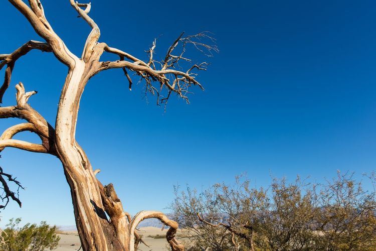 Sky Plant Tree Low Angle View Blue Clear Sky Nature No People Branch Day Growth Sunlight Bare Tree Copy Space Tranquility Beauty In Nature Outdoors Trunk Tree Trunk Dead Plant