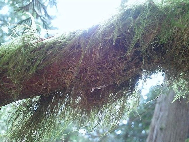 Don't know its scientific name; I call it Angelhair Moss. Walking Around Nature_ Collection  Light And Shadow Moss And Lichen