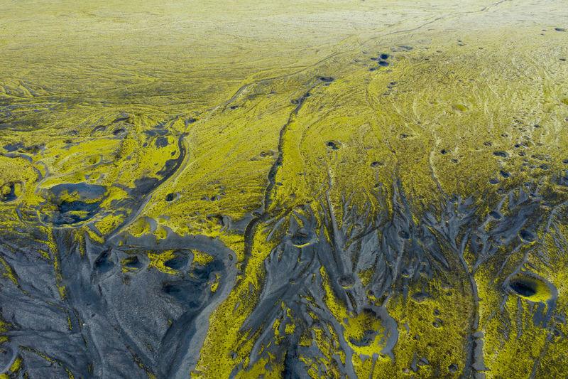 High angle view of yellow plants on land