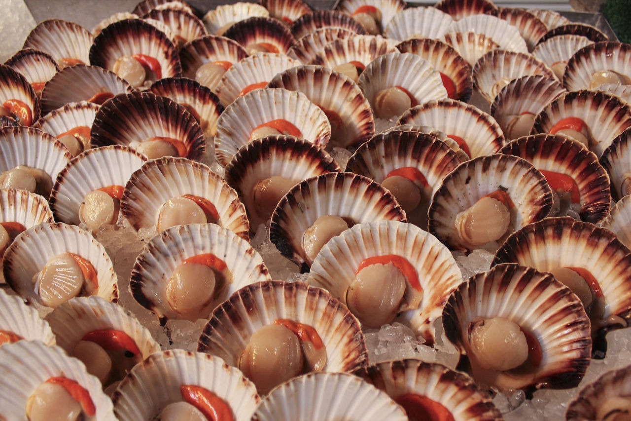 High Angle View Of Scallops For Sale At Market