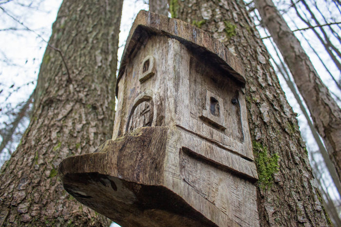 tree house Low Angle View Natural Living Nature Outdoors Tree Tree House Tree House In The Woods Tree Trunk