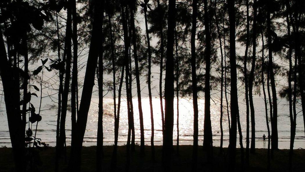 Bangsak beach, beach, tree, back&white, forest, sea, sun, sunset