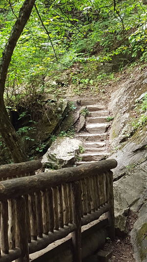 Great Smoky Mountains  Juney Whank Falls Rustic Stone Steps Beauty In Nature Bridge Day Green Leaves Nature No People Outdoors Tree Wood Bridge