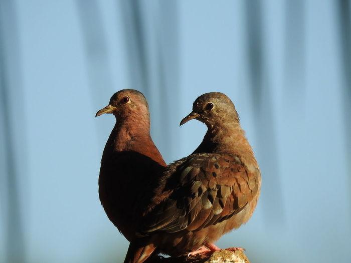 Bird Side View