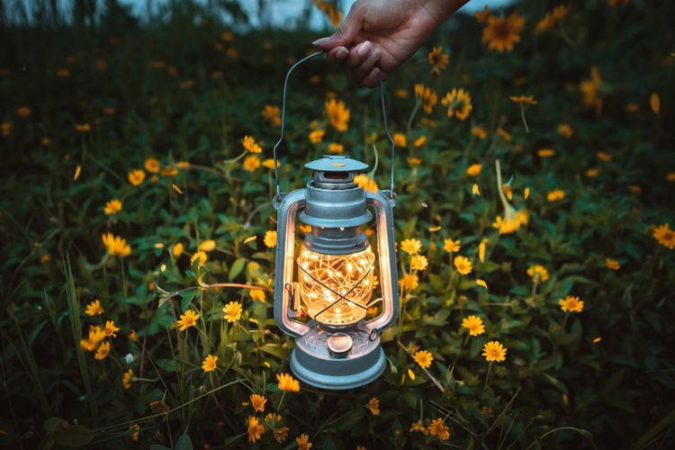 Let light shine out of darkness.🌻 Celebration Christmas Life Light Lights Live for the Story Container Day Electric Lamp Field Finger Flower Flower Collection Flower Head Flowering Plant Focus On Foreground Hand Human Hand Land Lifestyles Light And Shadow Lighting Equipment Nature Plant Real People