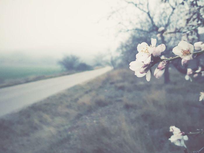 White flowers growing on tree