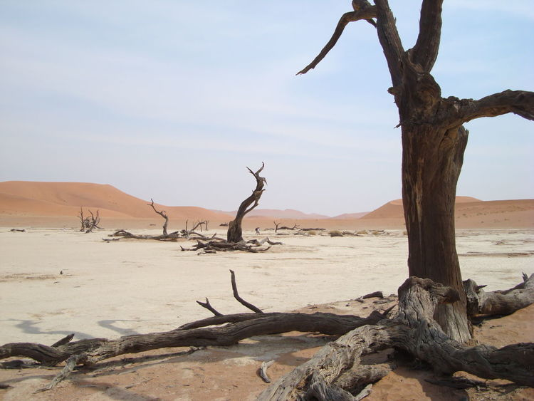 Deserts Around The World Namibia Landscape Namib Dunes Namibian Landscape Dead Vlei Dead Vegetation