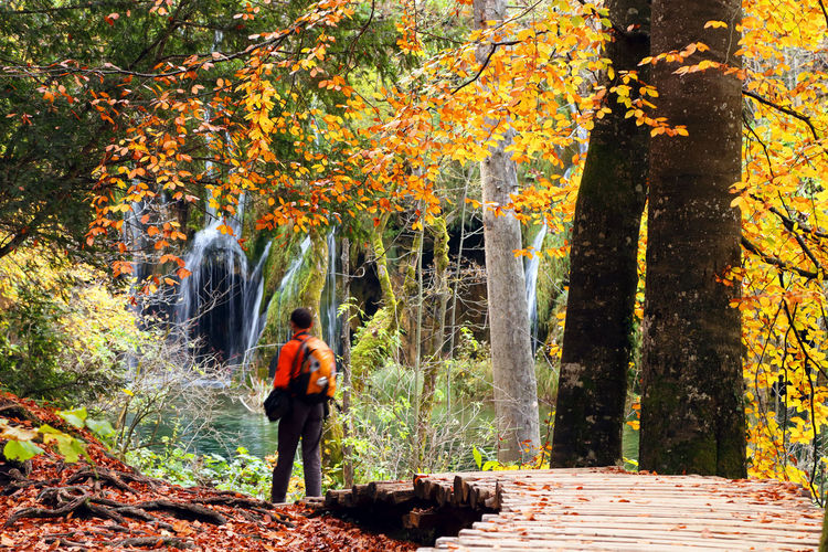 Rear View Of Man Walking On Boardwalk At Plitvice Lakes National Park