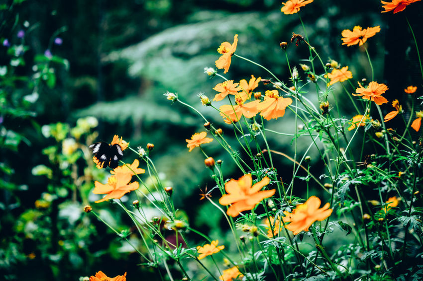 Lovely Day Orange Animal Themes Animal Wildlife Animals In The Wild Backgrounds Beauty In Nature Bee Black Butterfly Blooming Close-up Day Flower Flower Head Fragility Freshness Growth Insect Nature One Animal Outdoors Petal Plant Pollination Yellow The Week On EyeEm