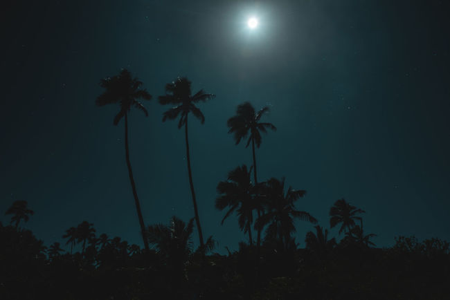 Moon Nights Cook Islands Atiu Moon MoonNights Night Photography Night Walks Silhouette Aitutaki Cook Islands Dark Beauty Darkness And Light Fullmoon Glares Haunting  Island Longtimeexposure Moon Glare Moonlight Movement Mysterious Mystical Nightscape Nightsky Palm Trees Rarotonga Stars
