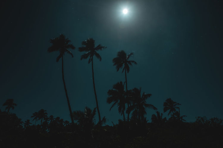 Moon Nights Cook Islands Atiu Moon MoonNights Night Photography Night Walks Silhouette Aitutaki Cook Islands Dark Beauty Darkness And Light Fullmoon Glares Haunting  Island Longtimeexposure Moon Glare Moonlight Movement Mysterious Mystical Nightscape Nightsky Palm Trees Rarotonga Stars