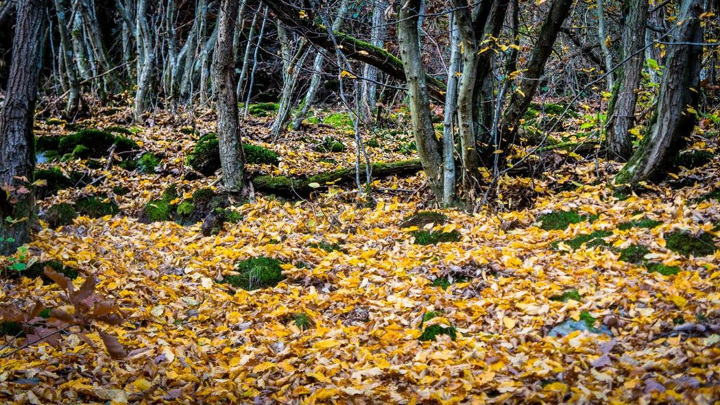 Autumn Autumn Colors Fall Beauty Forest Growth Nature Outdoors Tree Tree Trunk Wood Showcase: November