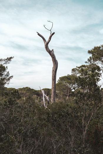 Bare tree branch against sky