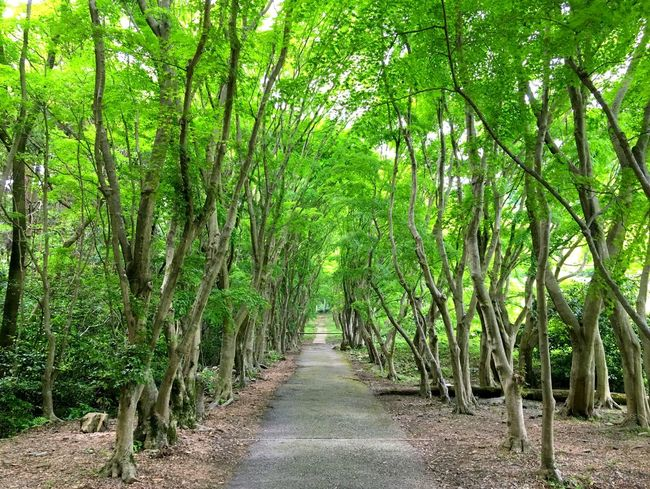 Bamboo Grove Beauty In Nature Day Deep Breath Fresh Freshness Green Green Color Green Color Growth Japanese Garden Japanese Style Lush - Description Nature No People Outdoors Quiet Moments Road Scenics The Way Forward Tranquility Tree Tree Trees And Sky Zen