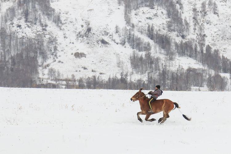 Hemu, Xinjiang - February 16, 2018: Tuva men competing in a horse racing competition in the Altai mountains in China ASIA Altai Mountains Bactrian Camel Ice Kanas Lake Urumqi XinJiang Altai China Grassland Hasake Minority Hemu Village Horse Racing Kanas Ski Country Snow Tuva Minority