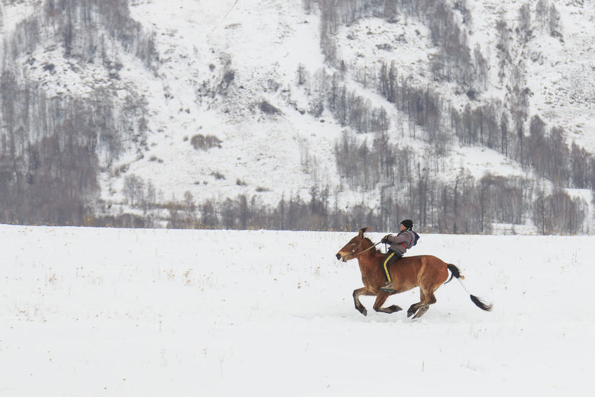 Hemu, Xinjiang - February 16, 2018: Tuva men competing in a horse racing competition in the Altai mountains in China ASIA Altai Mountains Bactrian Camel Ice Kanas Lake Urumqi XinJiang Altai China Grassland Hasake Minority Hemu Village Horse Racing Kanas Ski Country Snow Tuva Minority