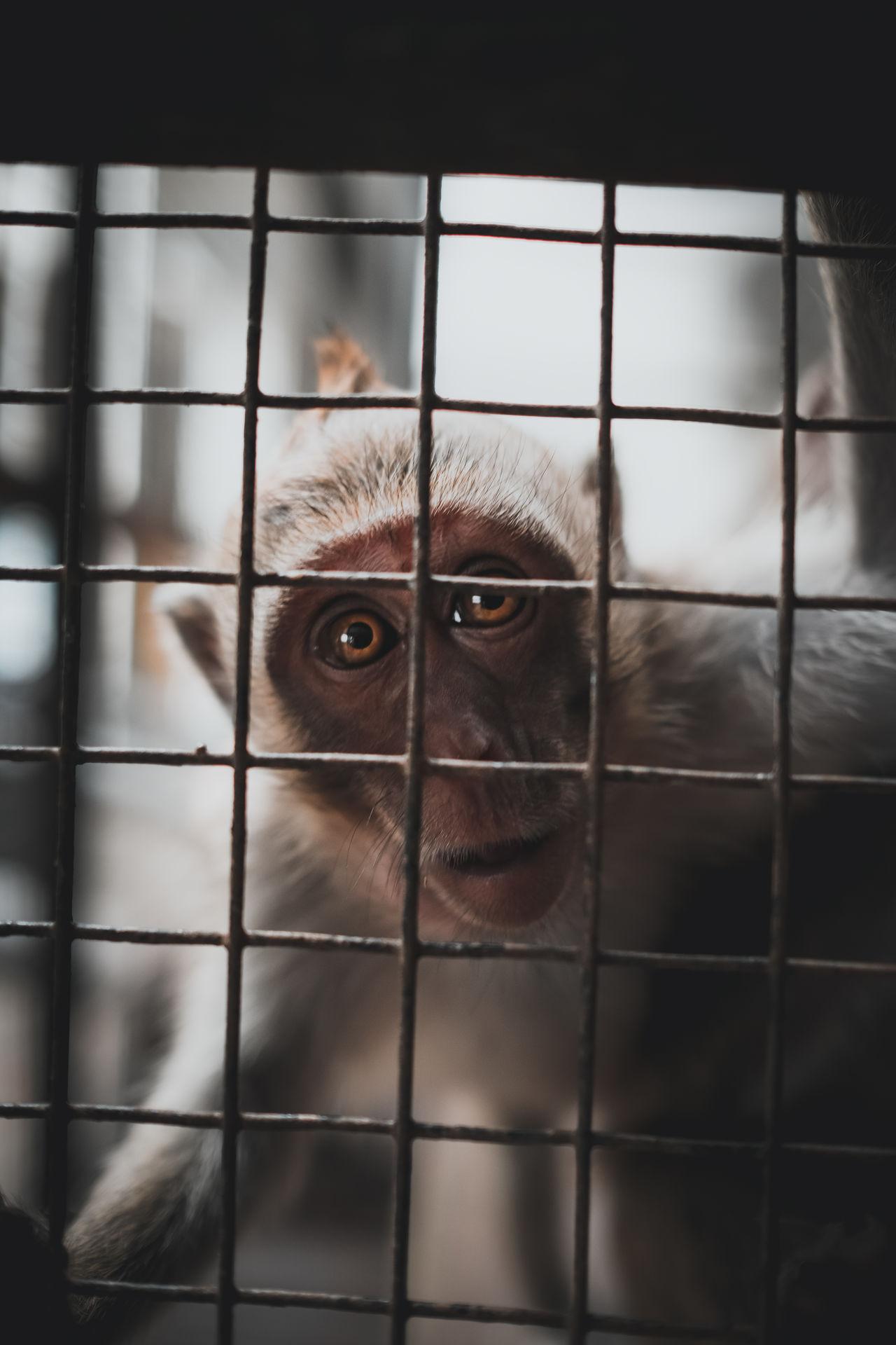 animal themes, animal, mammal, cage, one animal