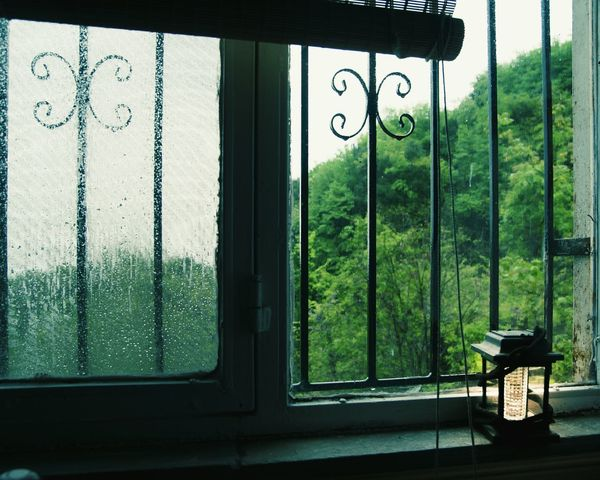 Rainy Day Rain Drops Rainymood Forest Photography Forest View Cabin In The Woods Window Day No People Outdoors Tree Close-up Lantern Light Lantern Room Lantern Photos Official EyeEm © Lanterns In The Dark First Eyeem Photo