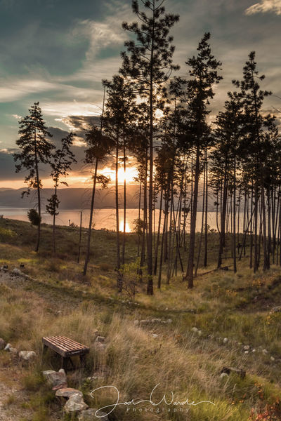 Cloud - Sky Tree Trunk Scenics Outdoors Forest Day Grass Tree Area Sunset Rural Scene Pinaceae Pine Tree Agriculture Beauty In Nature Freshness Landscape No People Nature Sky Tree