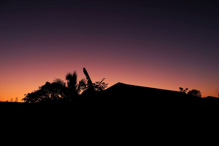 Silhouette plants against sky during sunset