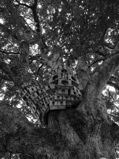 Tree Trunk Bird Houses Cow Tower Norwich Built Structure Architecture Tiny People Tree House♥ Black And White Beautifully Organized