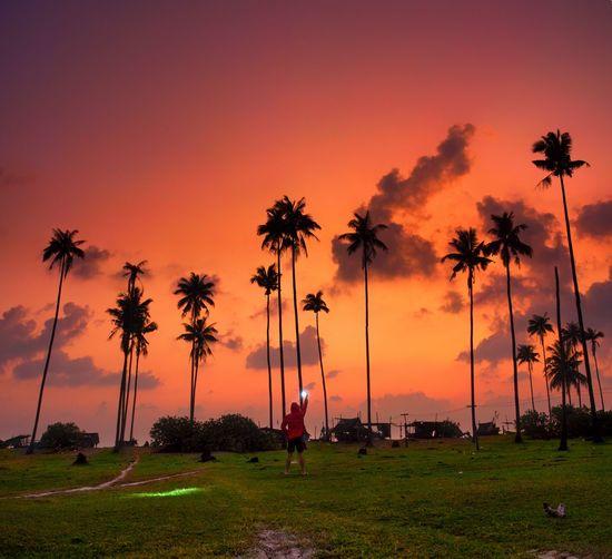 Silhouette palm trees at beach against orange sky