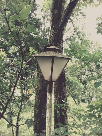 An old light post