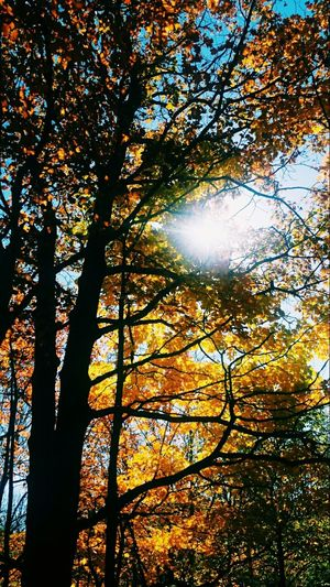 Sunlight Nature Beauty In Nature Scenics Tranquility Sunbeam Tranquil Scene Outdoors WoodLand Majestic Sky Sun Timing And Luck fall blessings Solvay House Solitude Hospice Beauty In Nature