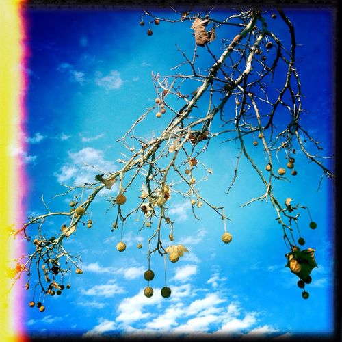 Purehipstamatic IPhone5 Look Up Taking Photos