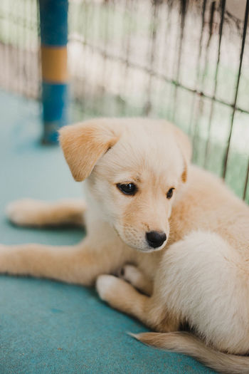Puppies at dog shelter. :) Blonde Cuties DogLove Dogs Dogs Of EyeEm Mutts Napping Puppy Love Animal Shelter Close-up Dog Dog Love Dog Photography Dog Shelter Dogslife Labrador Retriever Mix Nap Napping Dogs Pets Puppies Puppy Puppy Photography Puppy Sleeping Puppy❤