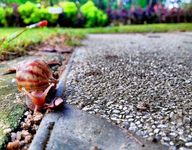One Animal Animal Themes Animals In The Wild Outdoors Day Nature No People Close-up Snail🐌