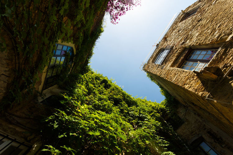 Tree Growth Low Angle View House Nature Outdoors Building Exterior Architecture No People Plant Day Sky Beauty In Nature Water Italia Italy🇮🇹 Travel Destinations Village Mountain Village Building Architecture Bussana Vecchia Liguria Built Structure