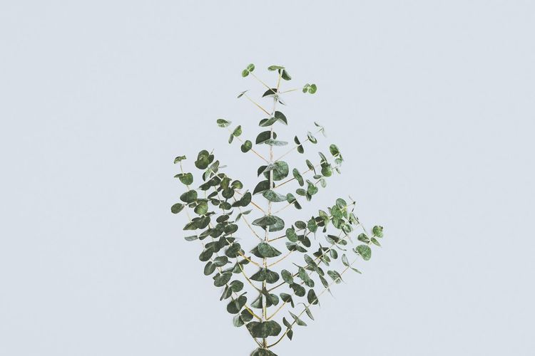 Studio Shot White Background Copy Space Leaf No People Love Growth Nature Close-up Fragility Day Freshness