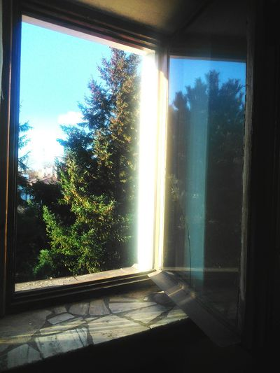 Autumn Window Reflections סתיו