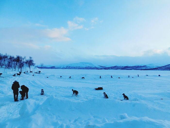 lago espectacular Artic Life Circle Dogs Freeze Lake Snow Cold Temperature Winter Full Length Mountain Sky Landscape