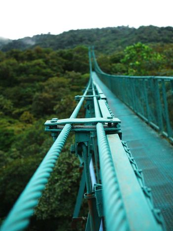 Travel Journey No People Travel Destinations Tropical Climate Tropical Paradise Costa Rica Nature Green Color Tree Cable Bridge Over The Trees Adventure