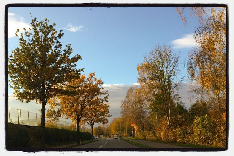 Guten Morgen auf den Herbststraßen / Good morning at the autumn streets / Bom dia nas ruas de outono Outono