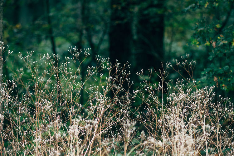 Plants growing in forest