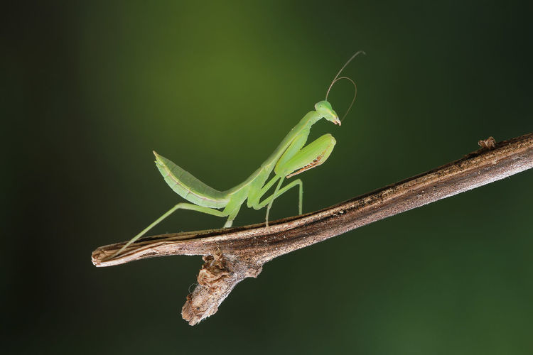 mantis EyeEm