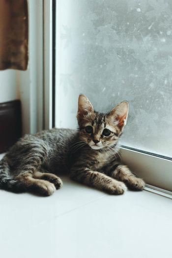 Portrait of cat sitting by window