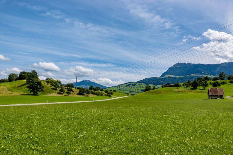 Landscape,