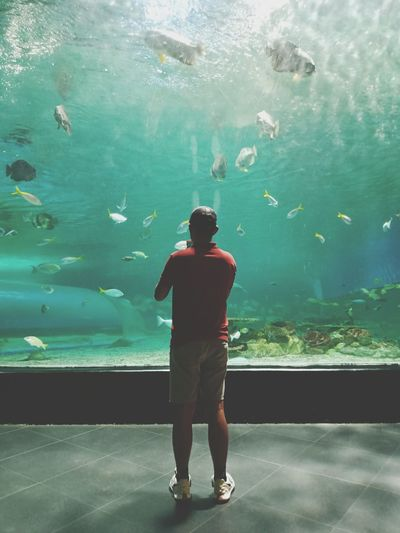 Rear view of man standing in aquarium