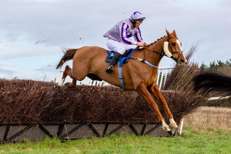 Point to Point racing at Hampton, Suffolk, UK Racing Horse Racing Point To Point Racing Jumping Spider Horses Jockey Horse Animal Animal Themes Domestic Riding Activity